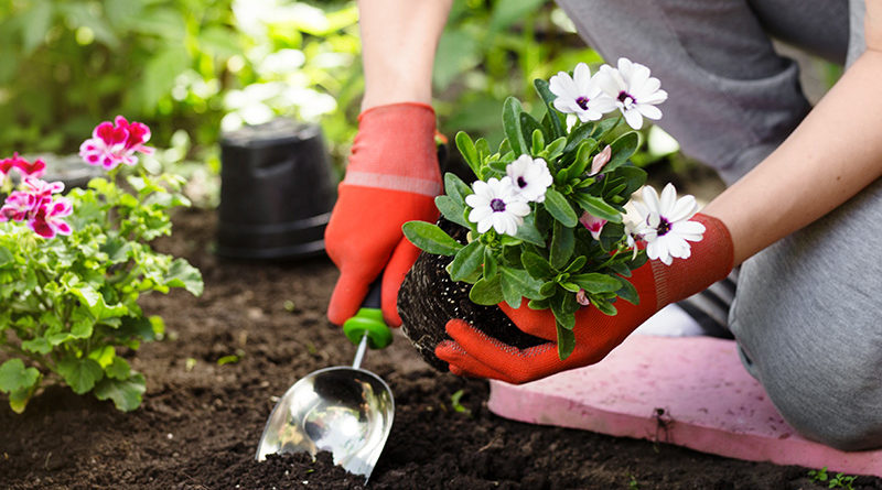Plantation Fleurs